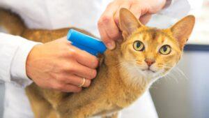 Чипирование домашних животных на дому в Москве